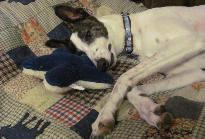 Large Greyhound Dog Beds